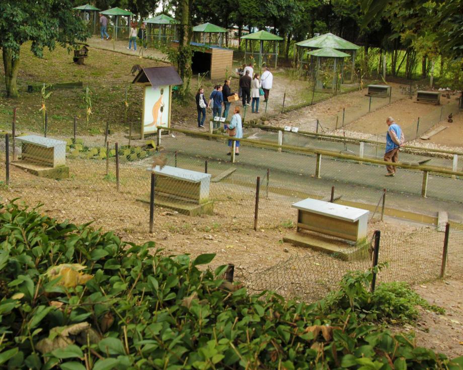 parcs-canards-a-la-ferme-de-beaumont